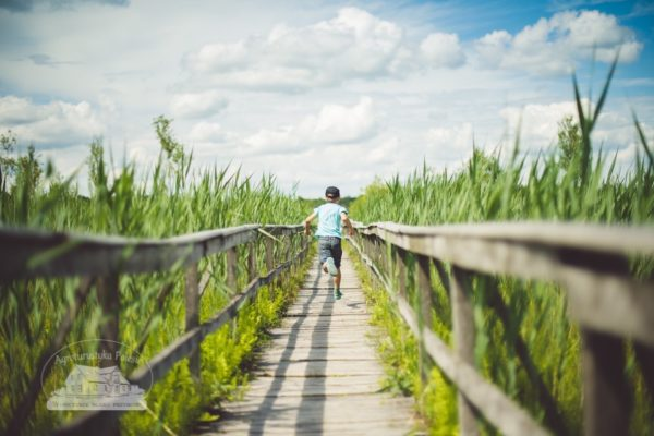 Kładka przez bagna w Poleskim Parku Narodowym